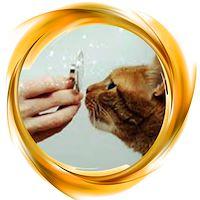 بهداشتی حیوانات