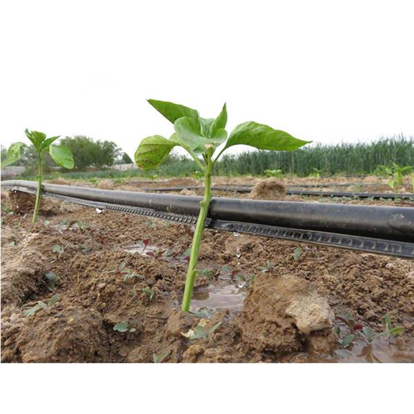 تولید کننده نوار ابیاری قطره ای