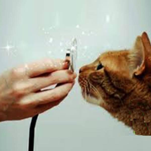 کلینیک گواهی سلامت حیوانات