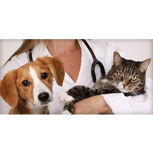 بیمارستان تشخیص هویت حیوانات