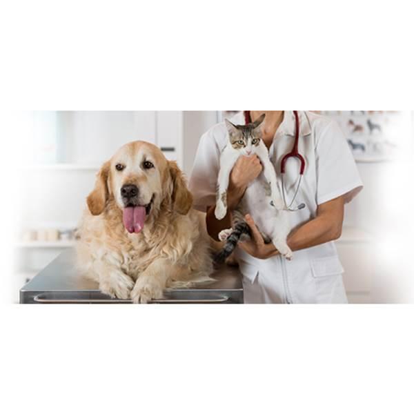 بیمارستان متخصص حیوانات خانگی