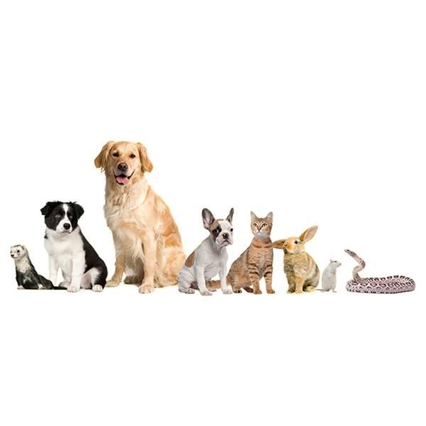 دکتر مشاوره حیوانات خانگی
