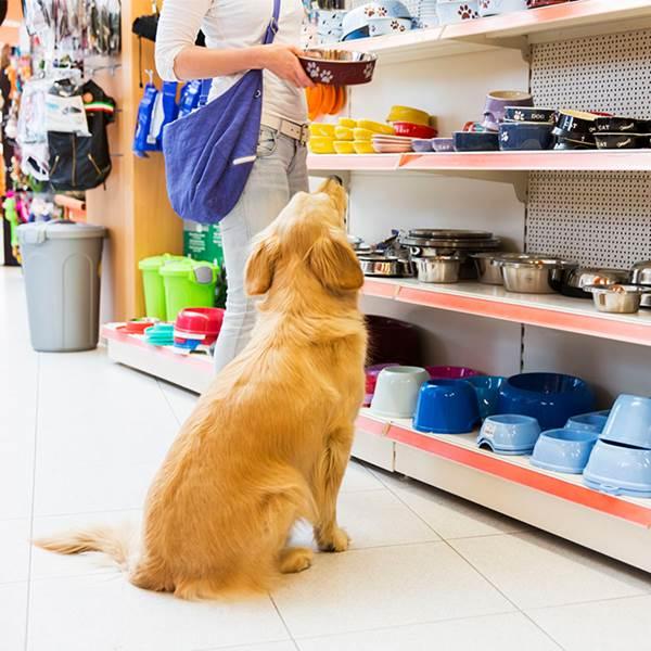 فروشگاه پت شاپ حیوانات
