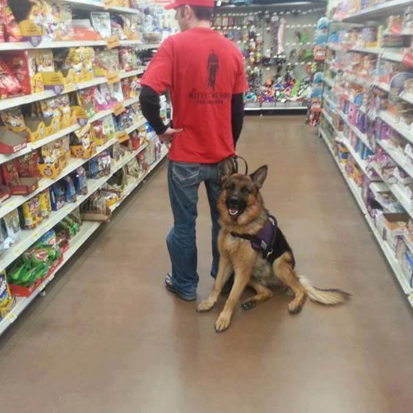 فروشگاه غذای سگ