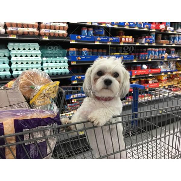نمایندگی فروش غذای سگ