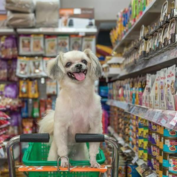 وارد کننده لوازم حیوانات خانگی