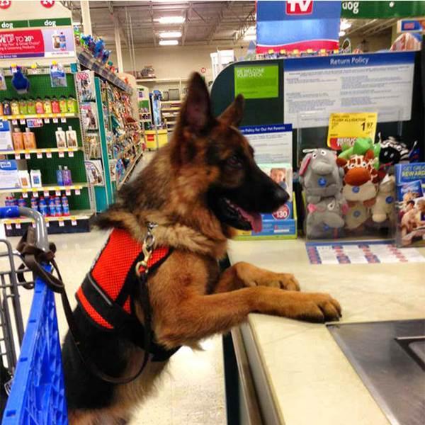 مرکز خرید لوازم حیوانات