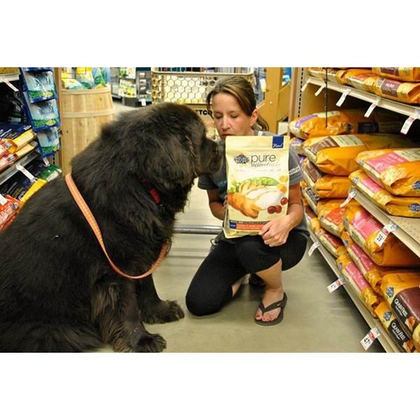 مرکز فروش غذای سگ