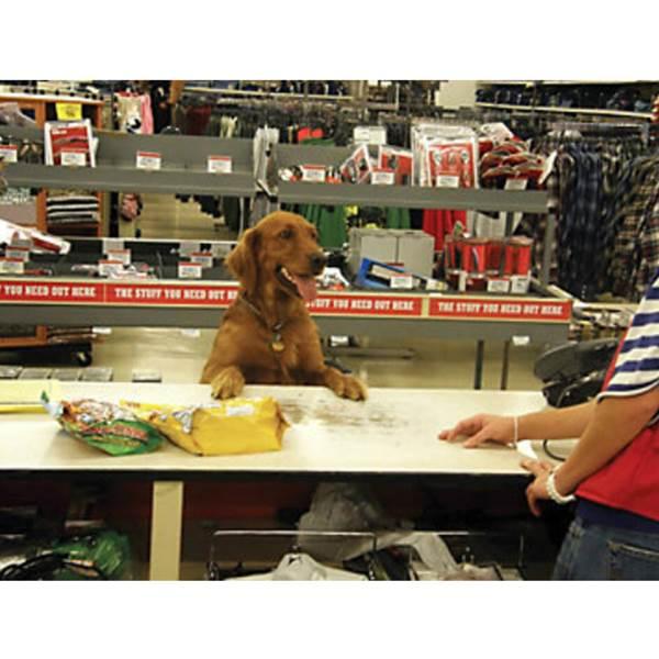 مرکز فروش لوازم حیوانات